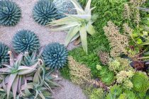 succulents landscaping